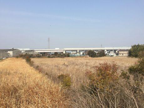 草木が繁茂している戸ヶ池が産業団地に生まれ変わる日も近