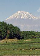 茶畑から富士山を臨む/「美しい茶園deつながるプロジェクト」富士市大淵笹葉地区(撮影 鮒子田稔理)