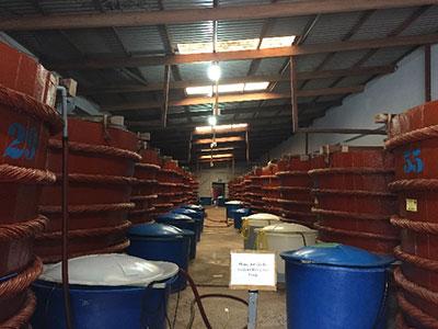 Phu Quoc島内のあるヌックマム製造工場