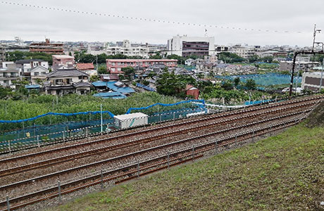 梨畑が広がる稲城市の風景(中央右寄りの白い建物が市役所)